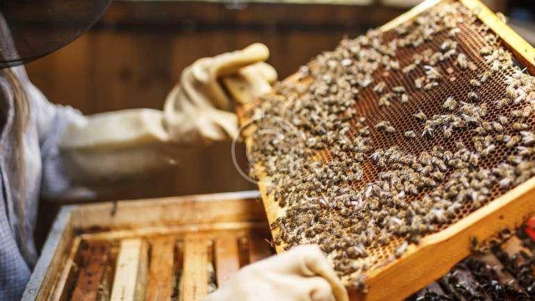 Γύρη Μελισσών